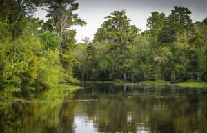 Why Protect Wetlands